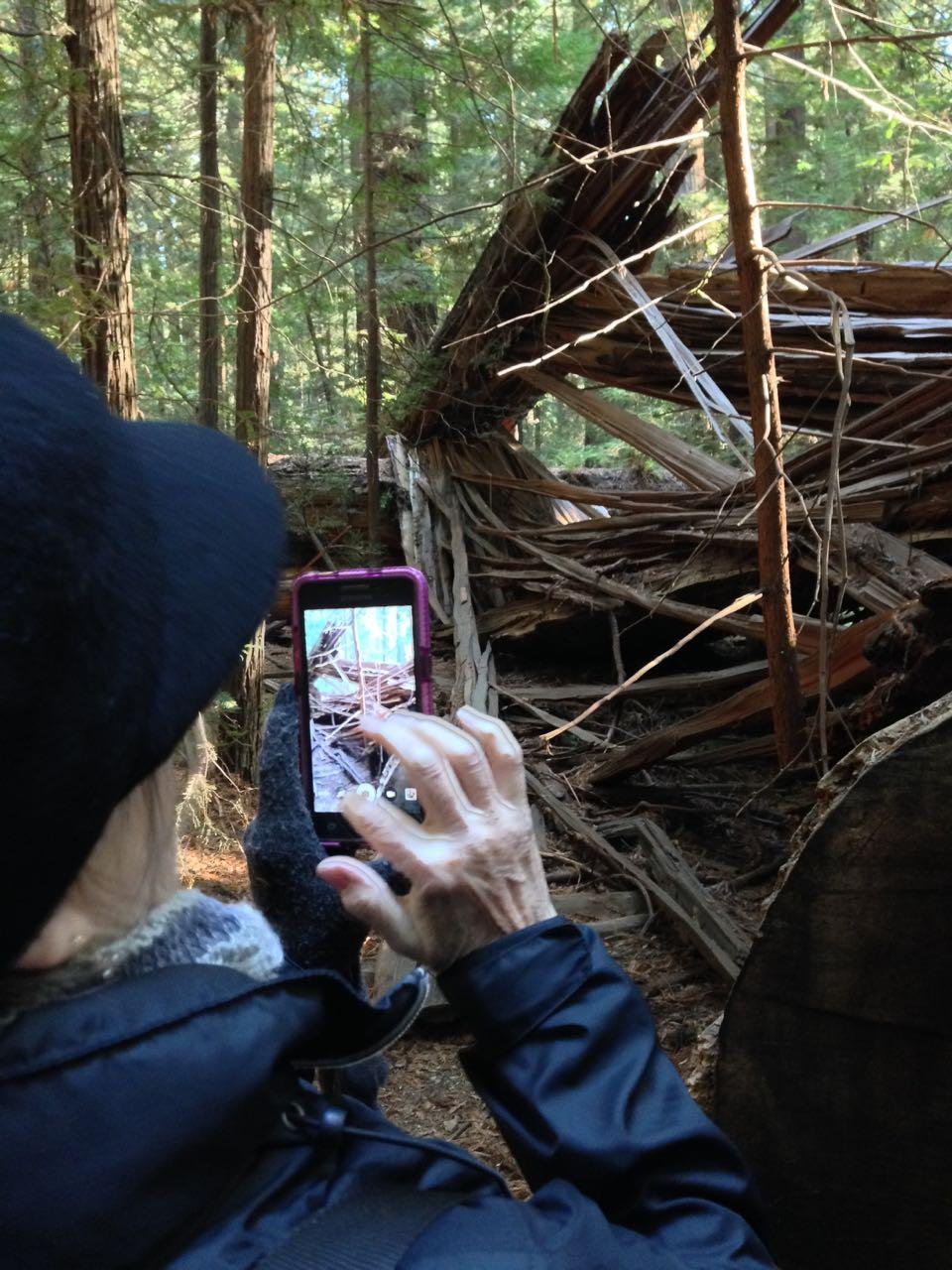 Redwoods 2017 10 08 23 Of 287