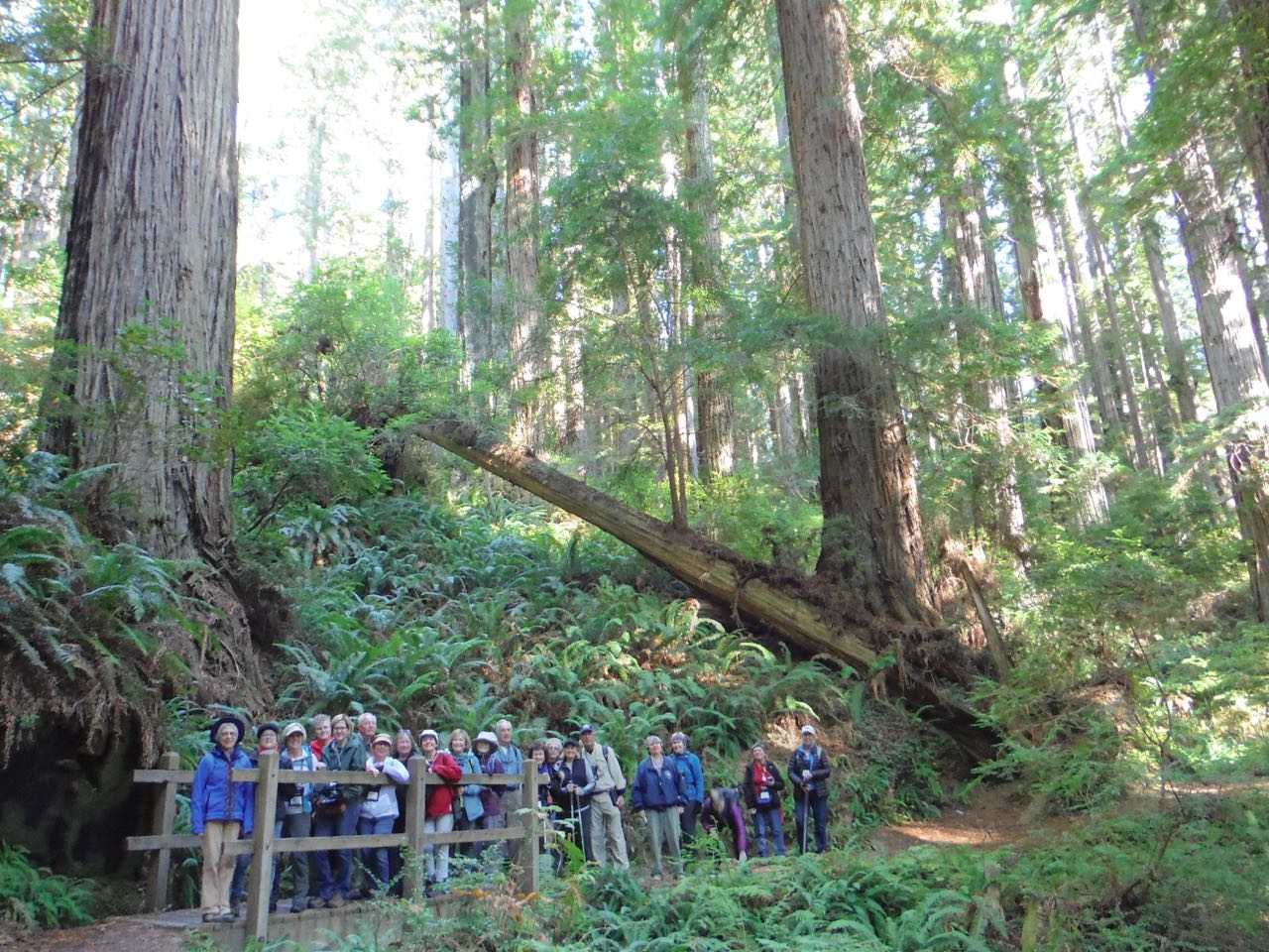 Redwoods 2017 10 08 230 Of 287