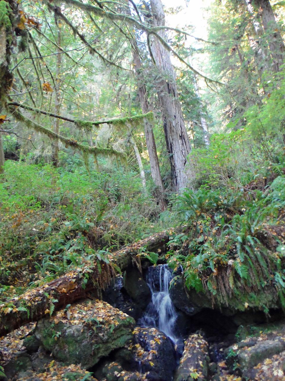 Redwoods 2017 10 08 231 Of 287