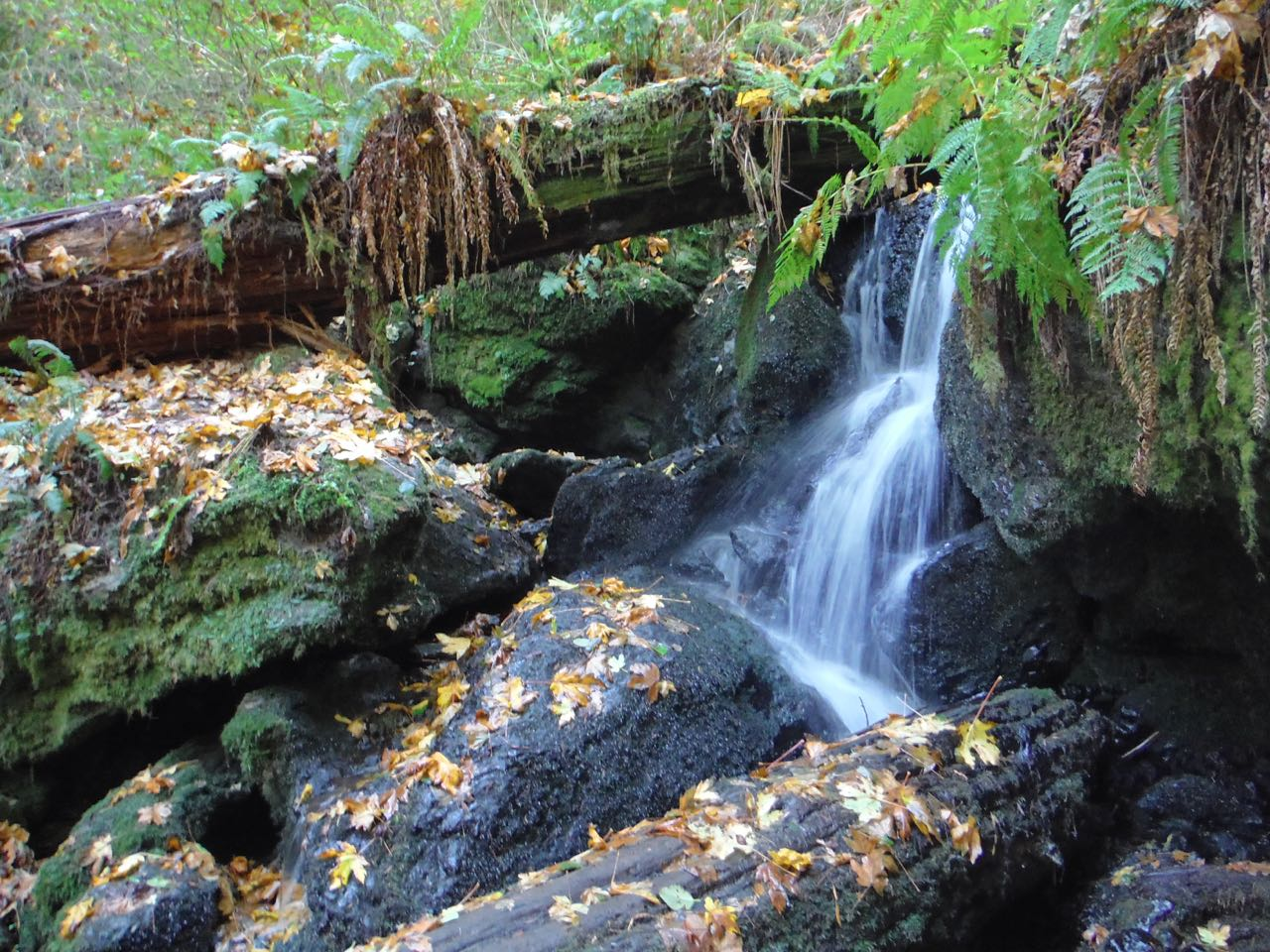 Redwoods 2017 10 08 232 Of 287