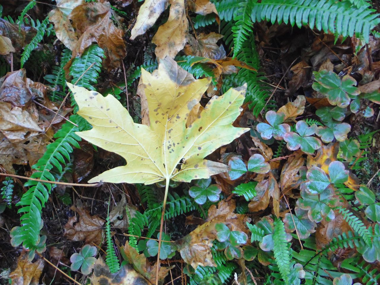Redwoods 2017 10 08 234 Of 287