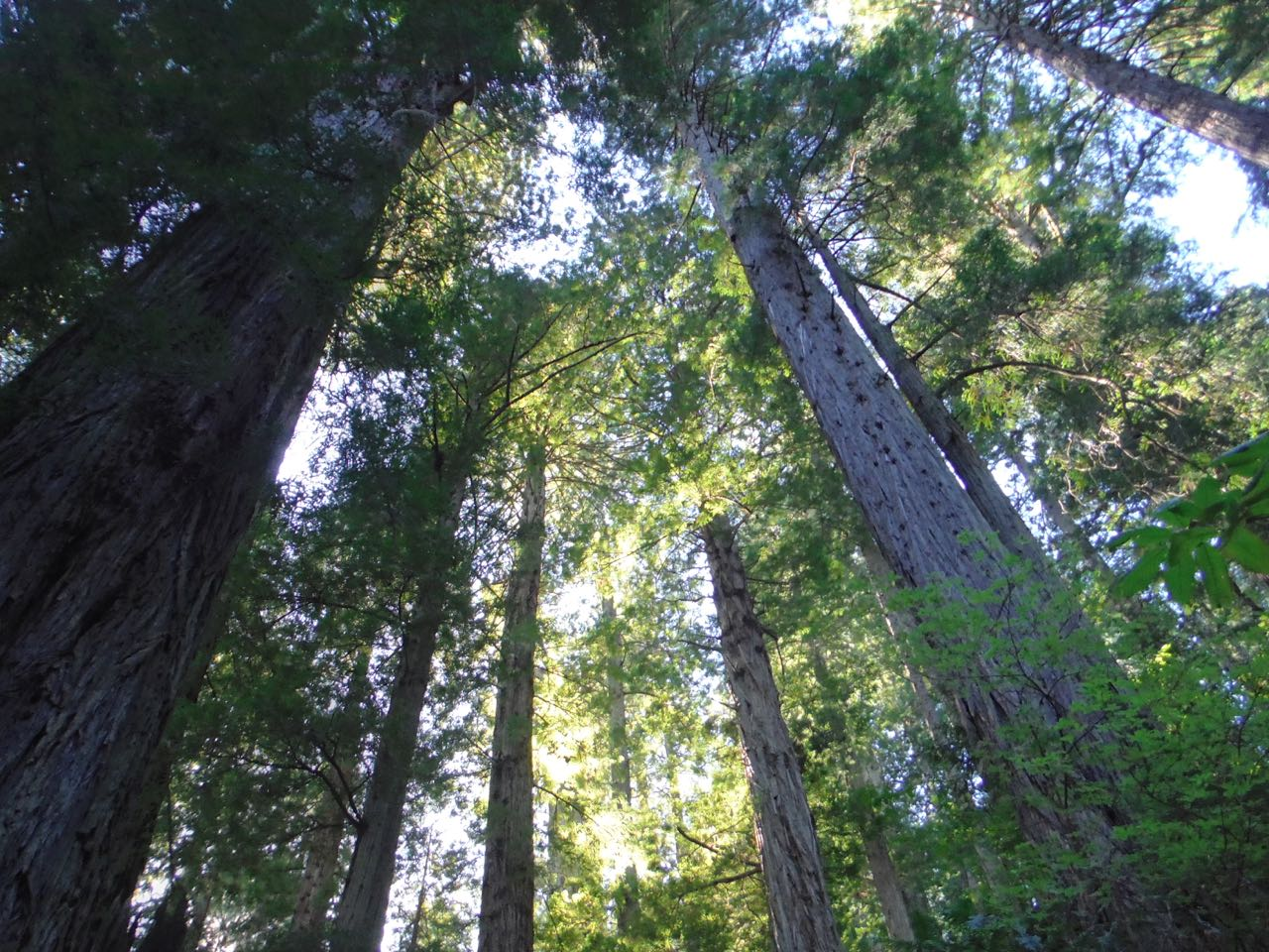 Redwoods 2017 10 08 236 Of 287