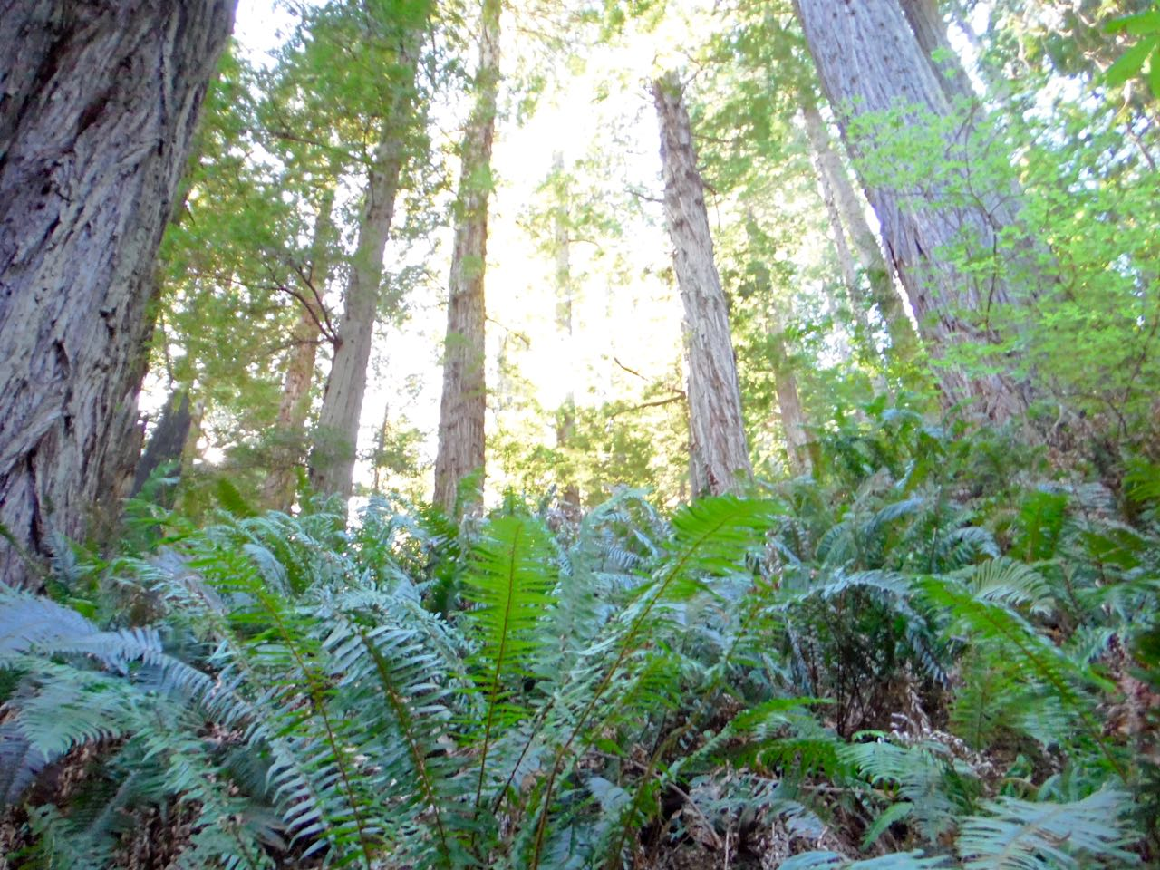 Redwoods 2017 10 08 237 Of 287