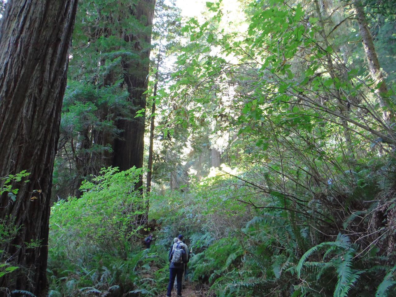 Redwoods 2017 10 08 238 Of 287