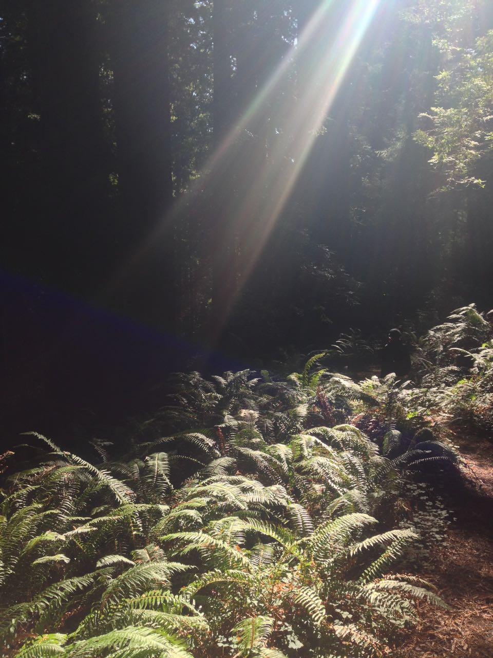 Redwoods 2017 10 08 240 Of 287