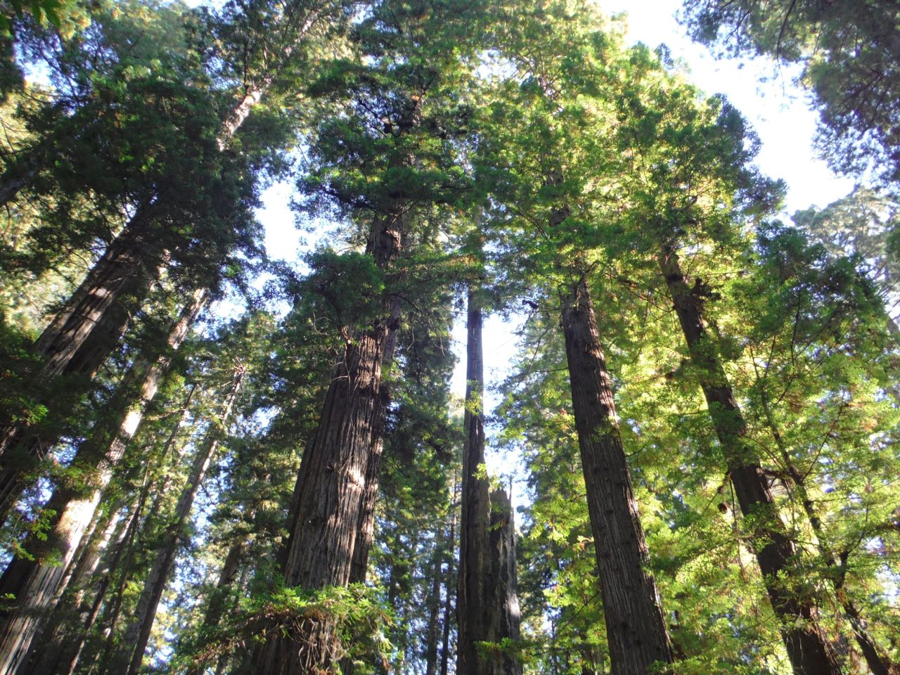 Redwoods 2017 10 08 241 Of 287