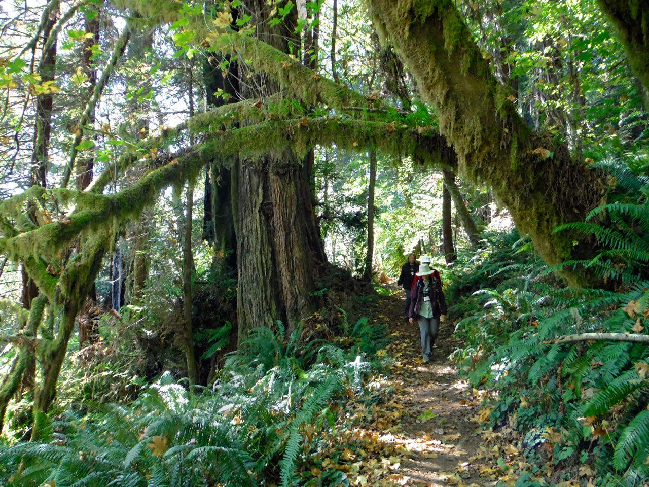 Redwoods 2017 10 08 245 Of 287