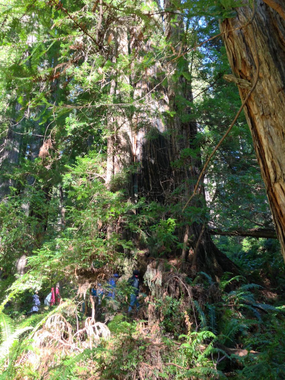 Redwoods 2017 10 08 247 Of 287