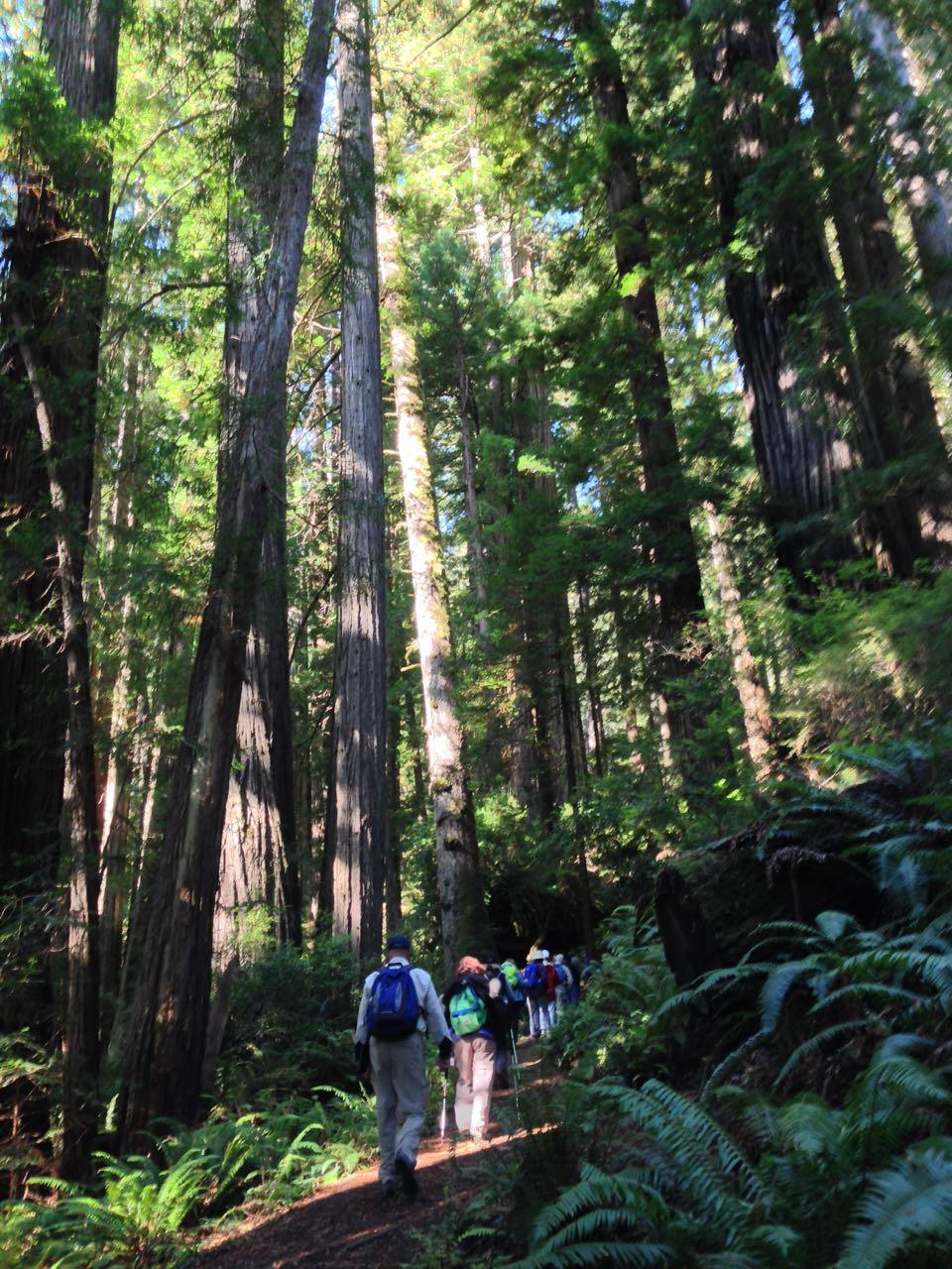 Redwoods 2017 10 08 248 Of 287