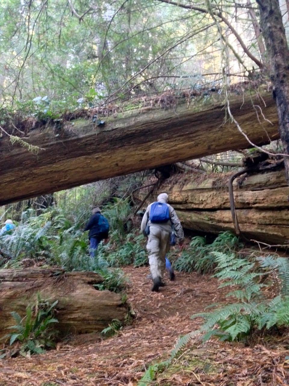 Redwoods 2017 10 08 249 Of 287