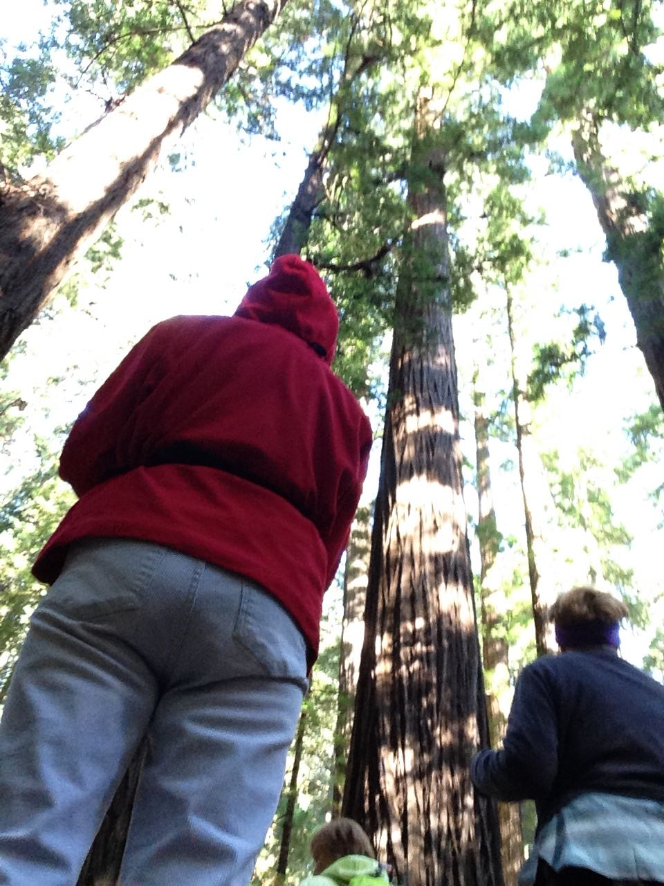 Redwoods 2017 10 08 25 Of 287