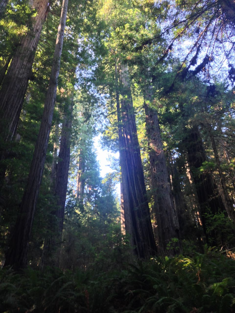 Redwoods 2017 10 08 251 Of 287