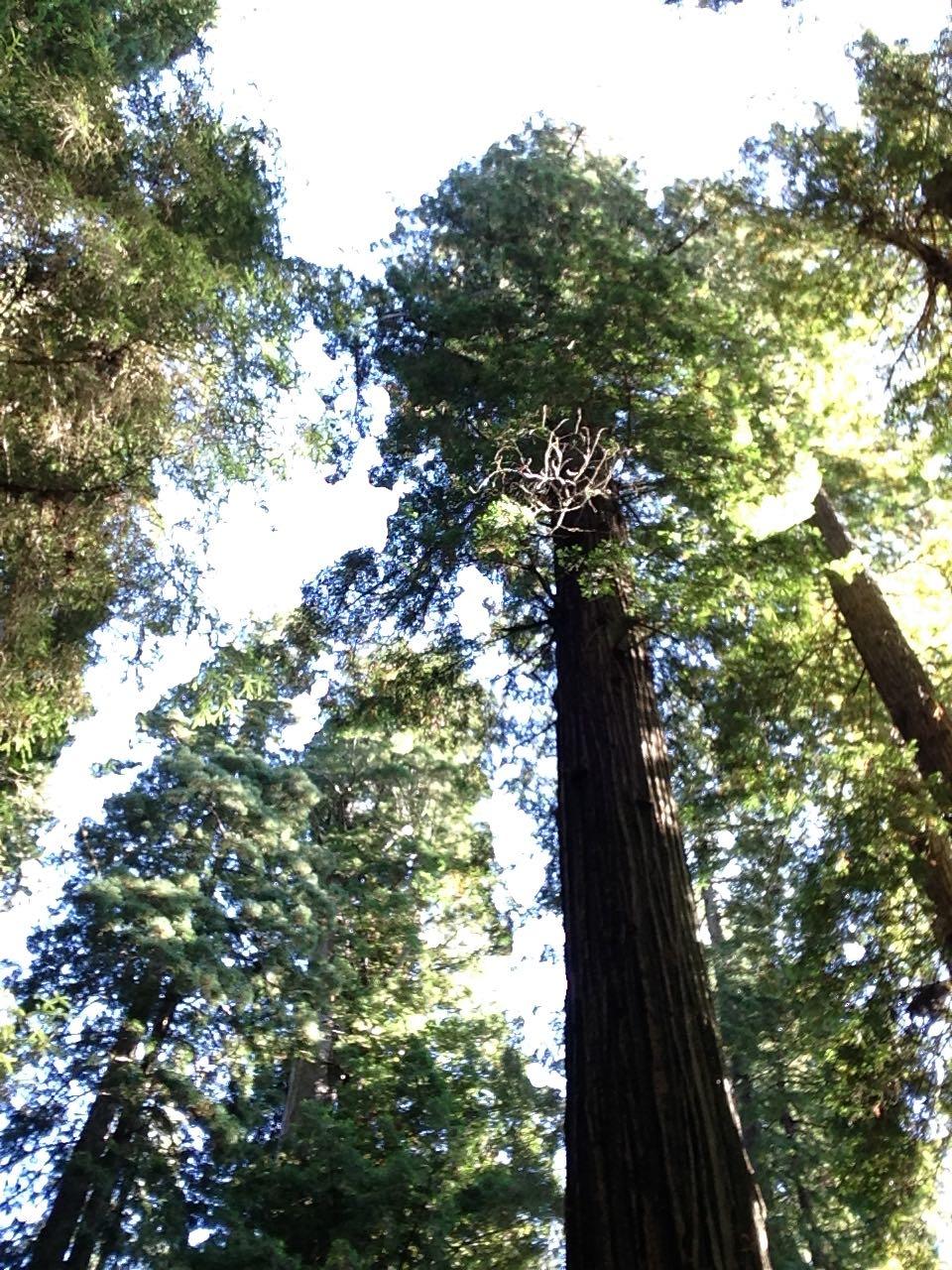 Redwoods 2017 10 08 253 Of 287