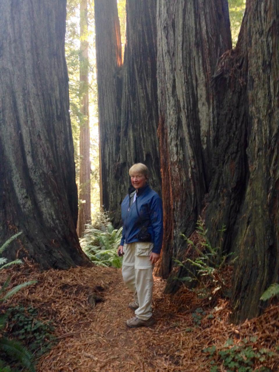 Redwoods 2017 10 08 254 Of 287