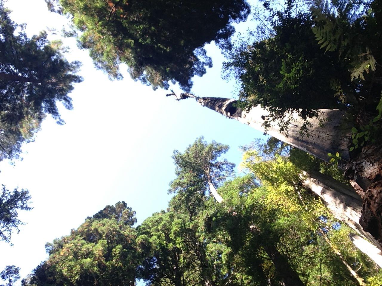 Redwoods 2017 10 08 255 Of 287