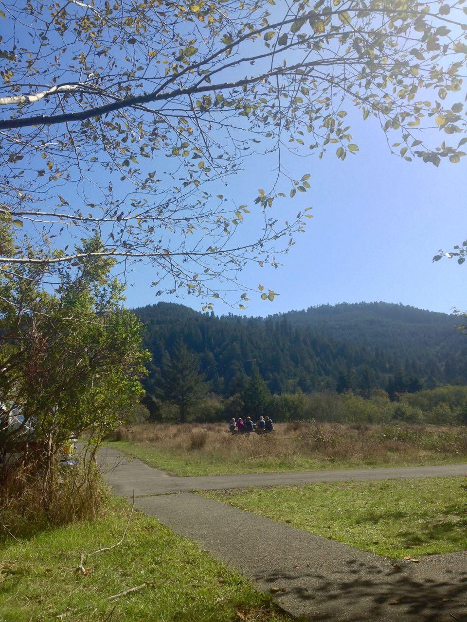 Redwoods 2017 10 08 258 Of 287