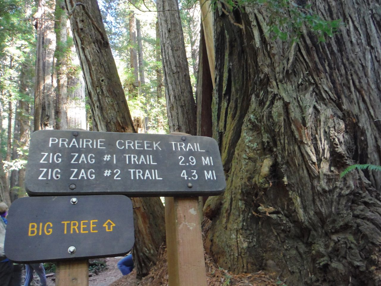 Redwoods 2017 10 08 260 Of 287