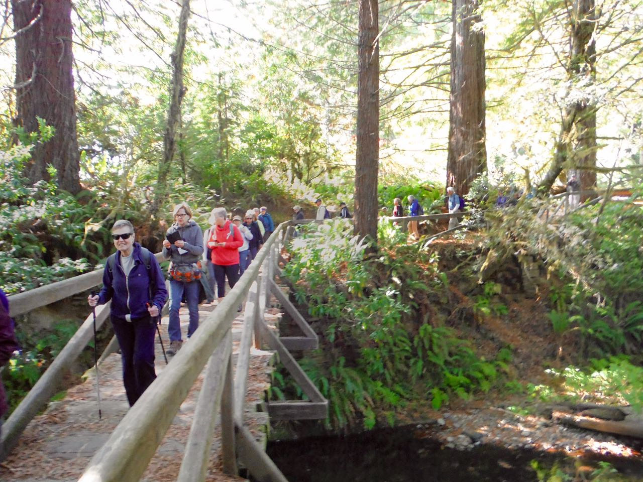 Redwoods 2017 10 08 261 Of 287