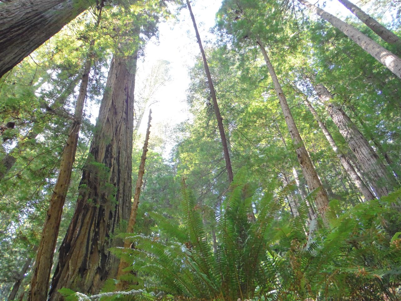 Redwoods 2017 10 08 263 Of 287