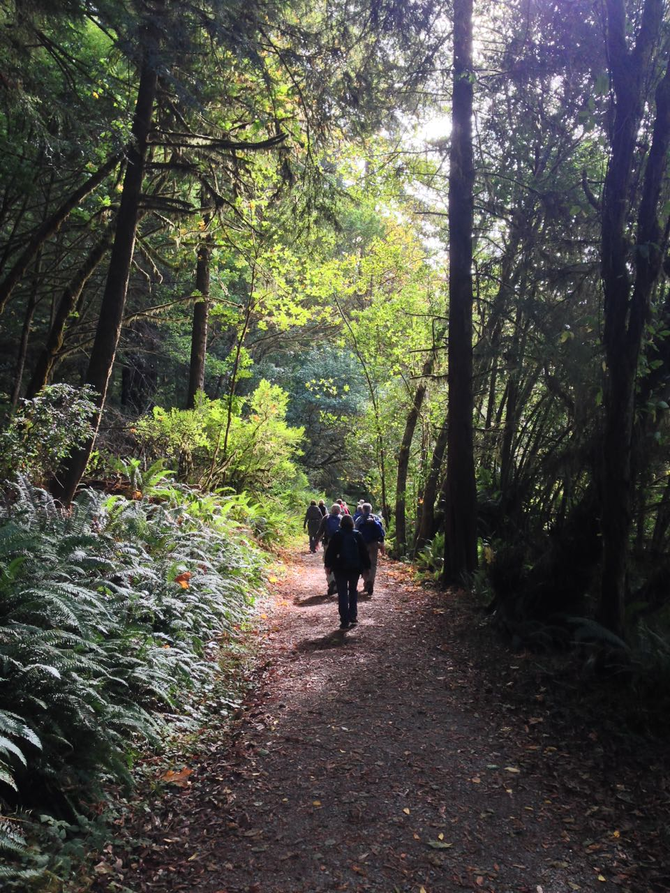 Redwoods 2017 10 08 264 Of 287