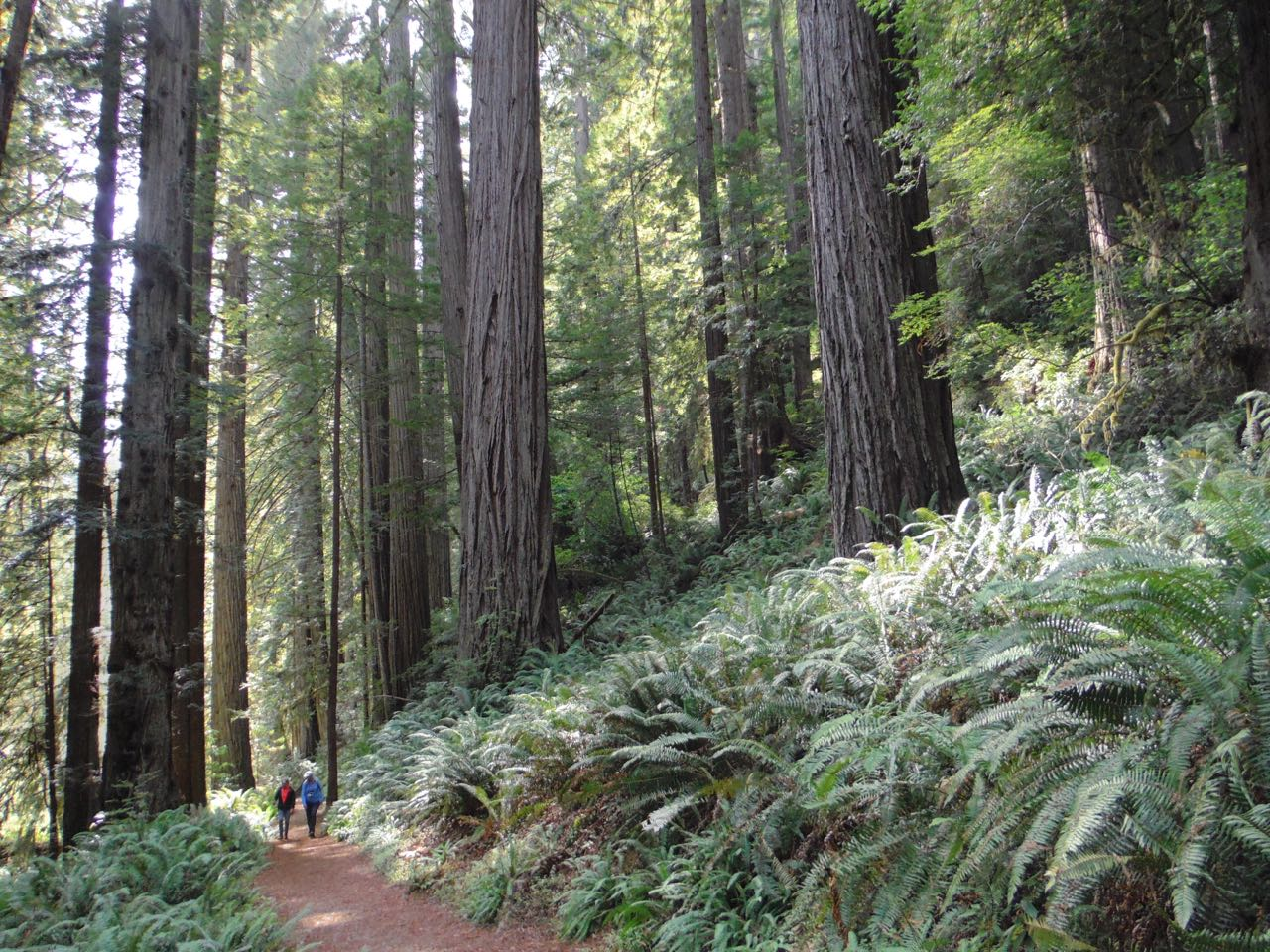 Redwoods 2017 10 08 265 Of 287
