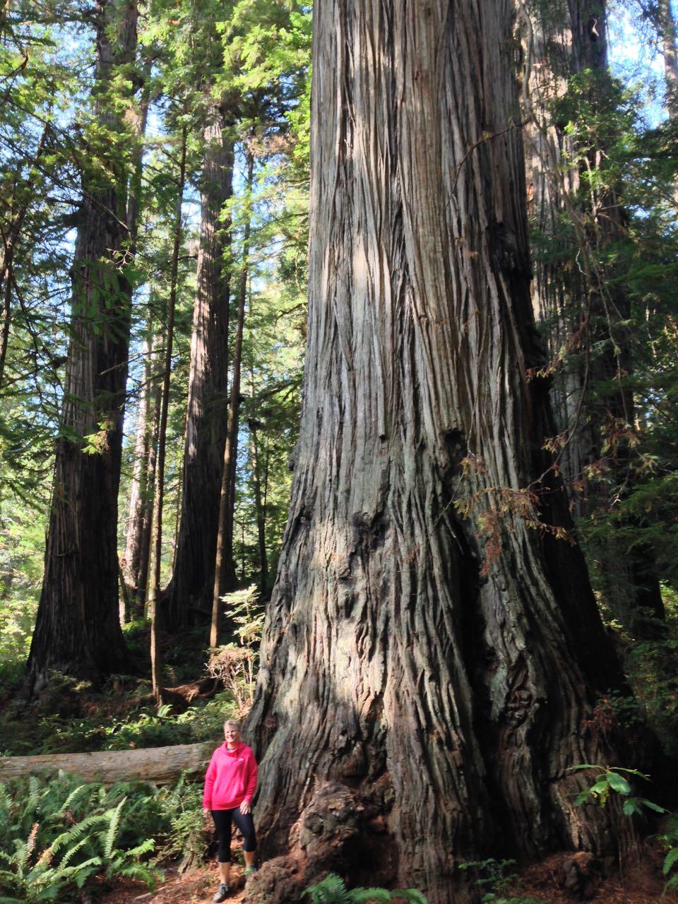 Redwoods 2017 10 08 266 Of 287