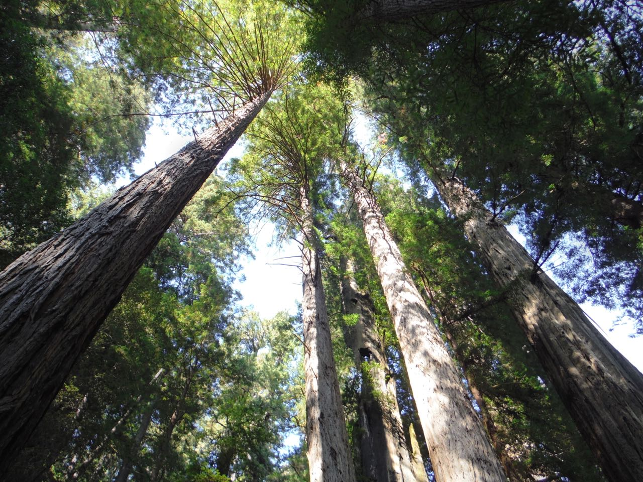 Redwoods 2017 10 08 268 Of 287
