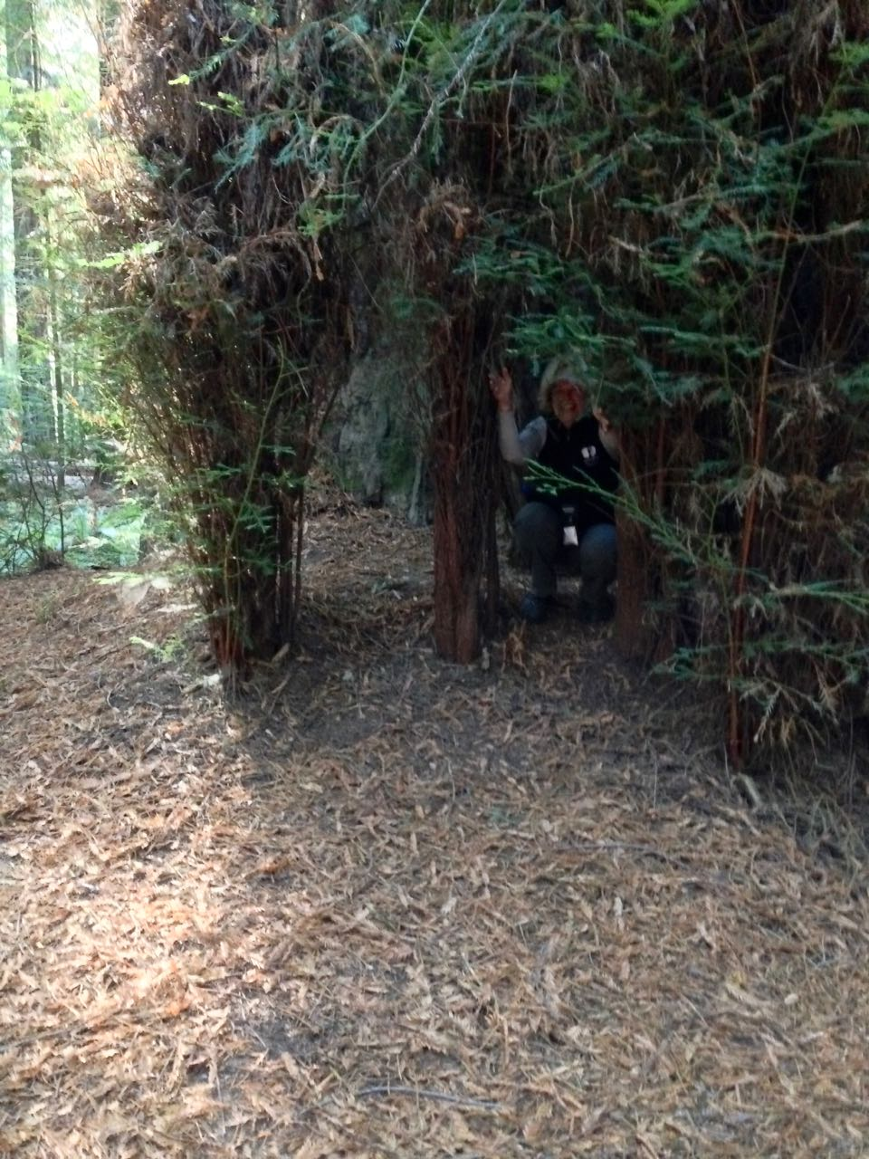 Redwoods 2017 10 08 27 Of 287