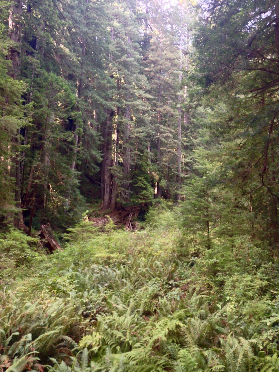 Redwoods 2017 10 08 270 Of 287