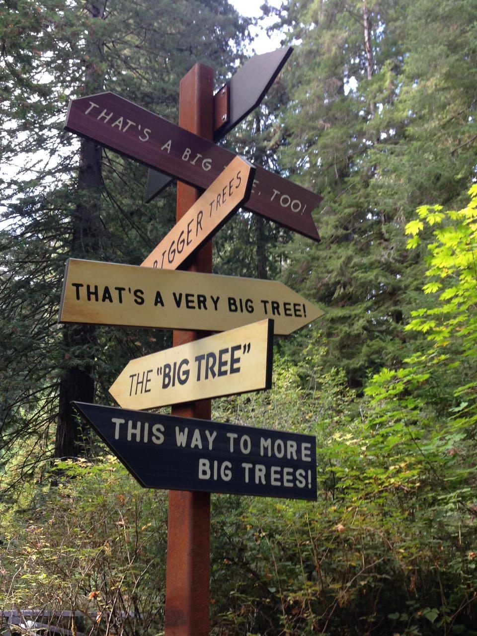 Redwoods 2017 10 08 281 Of 287