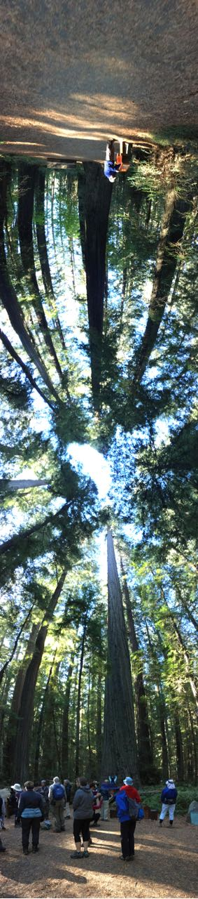 Redwoods 2017 10 08 29 Of 287