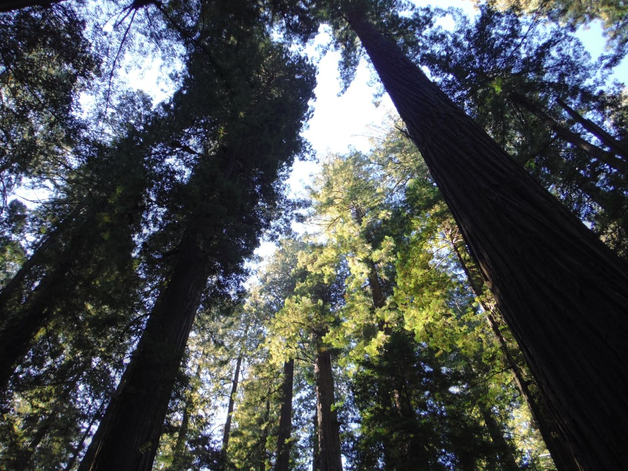 Redwoods 2017 10 08 3 Of 287
