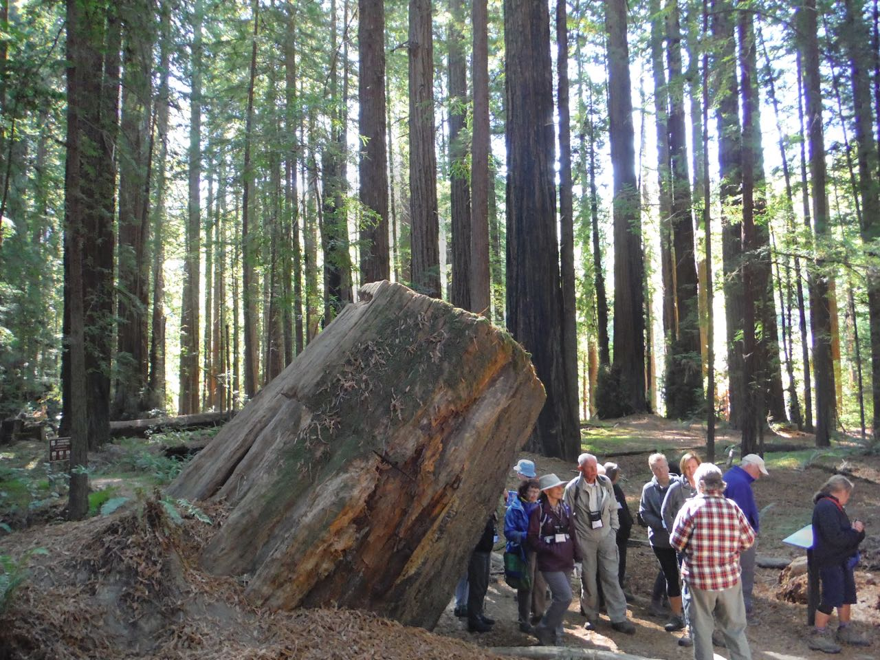 Redwoods 2017 10 08 30 Of 287