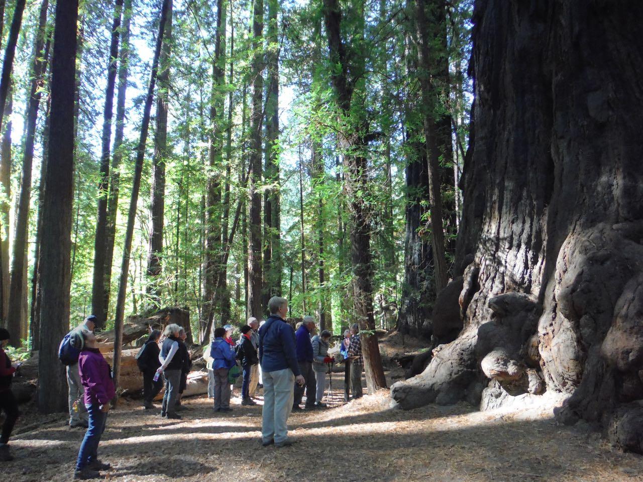 Redwoods 2017 10 08 32 Of 287