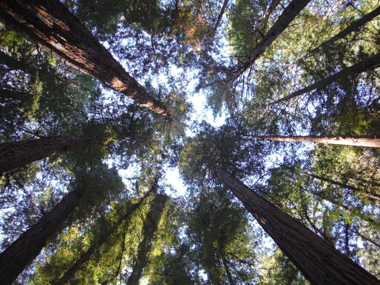 Redwoods 2017 10 08 33 Of 287