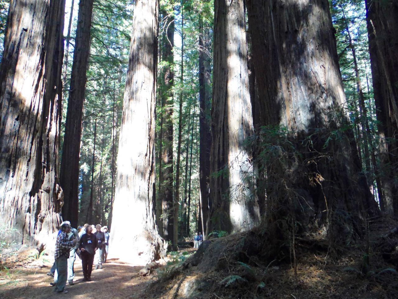 Redwoods 2017 10 08 34 Of 287