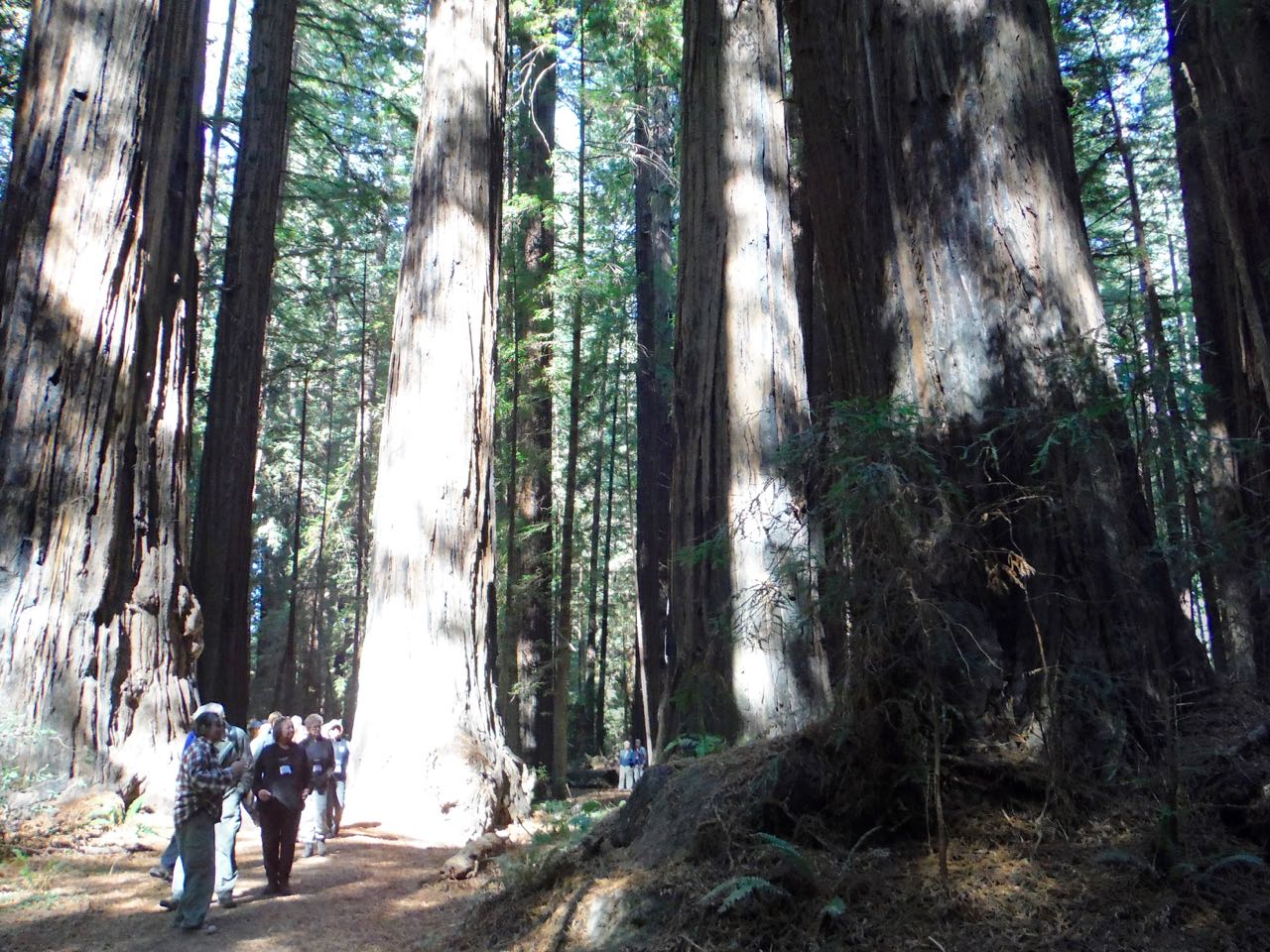 Redwoods 2017 10 08 34 Of 287