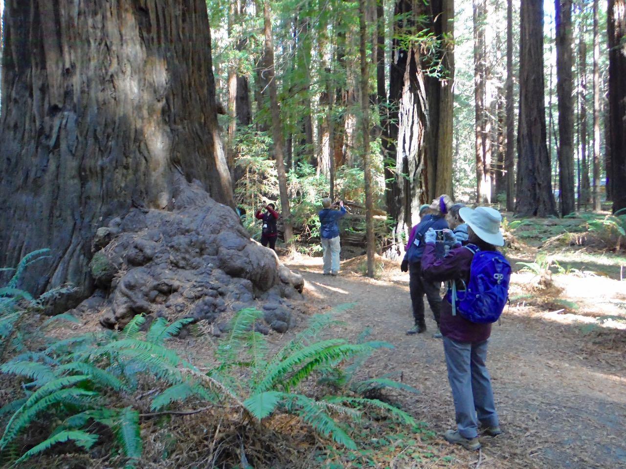 Redwoods 2017 10 08 35 Of 287