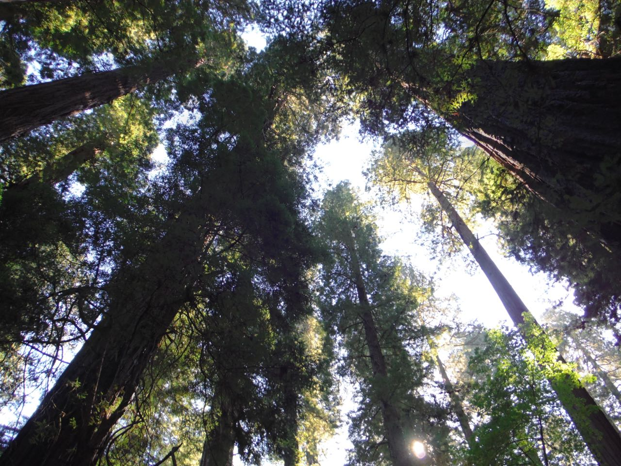 Redwoods 2017 10 08 36 Of 287