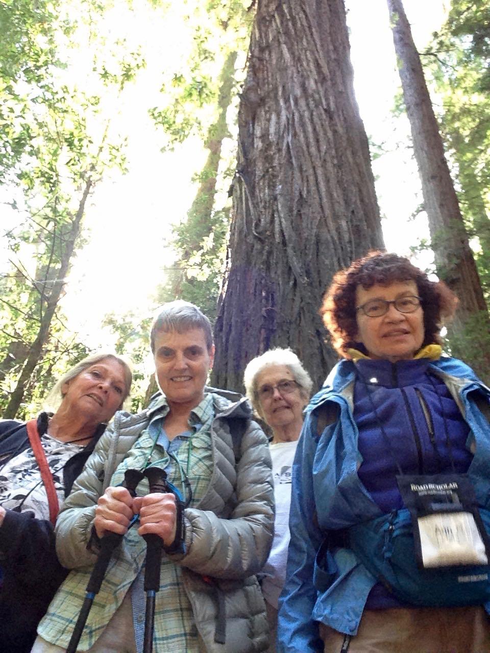 Redwoods 2017 10 08 37 Of 287