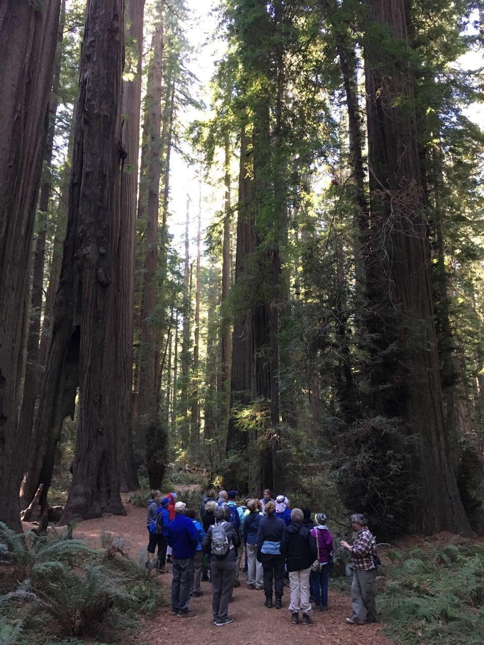 Redwoods 2017 10 08 38 Of 287