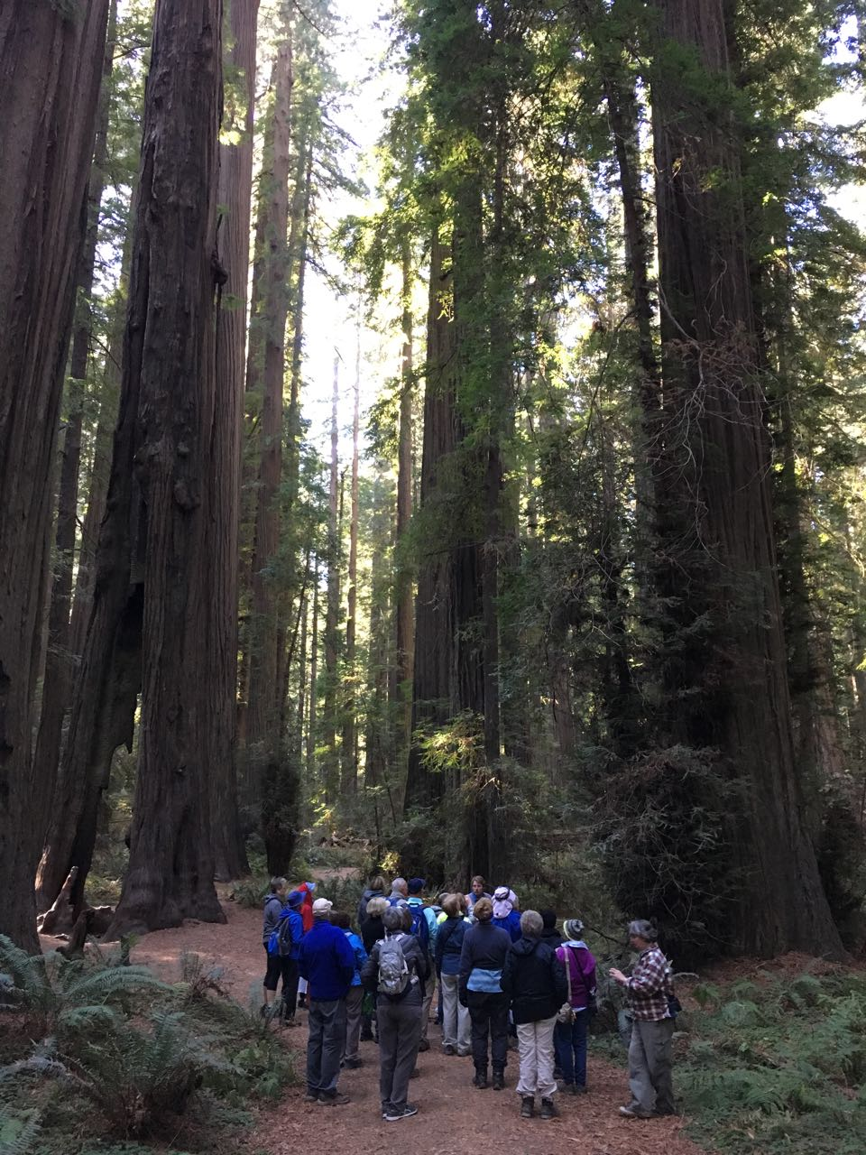Redwoods 2017 10 08 38 Of 287
