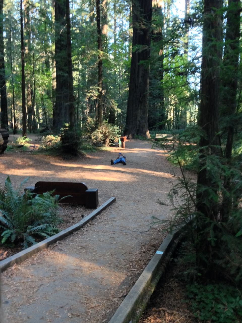 Redwoods 2017 10 08 4 Of 287