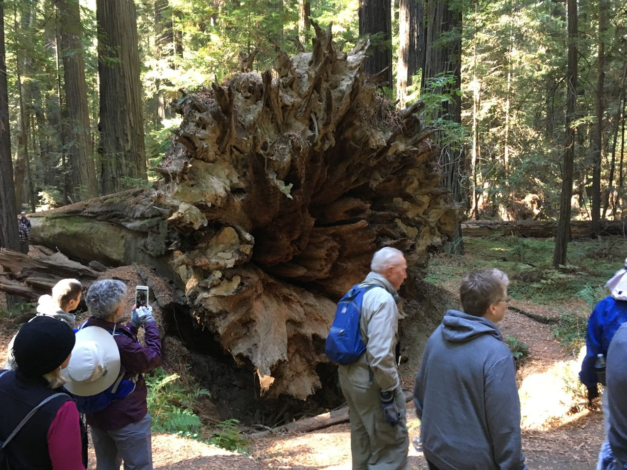 Redwoods 2017 10 08 42 Of 287