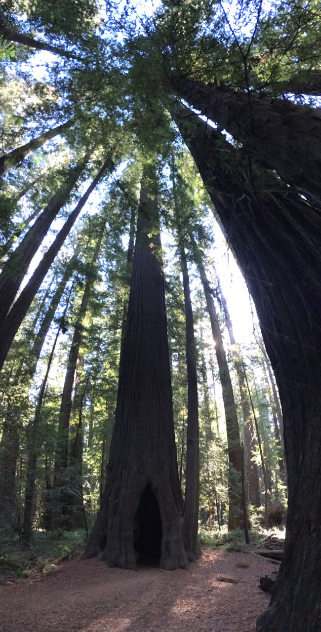 Redwoods 2017 10 08 43 Of 287
