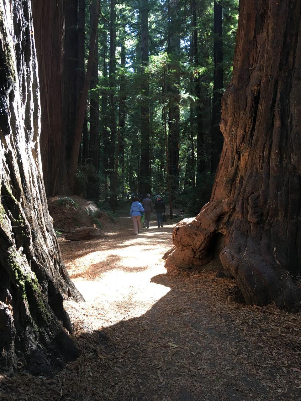 Redwoods 2017 10 08 44 Of 287
