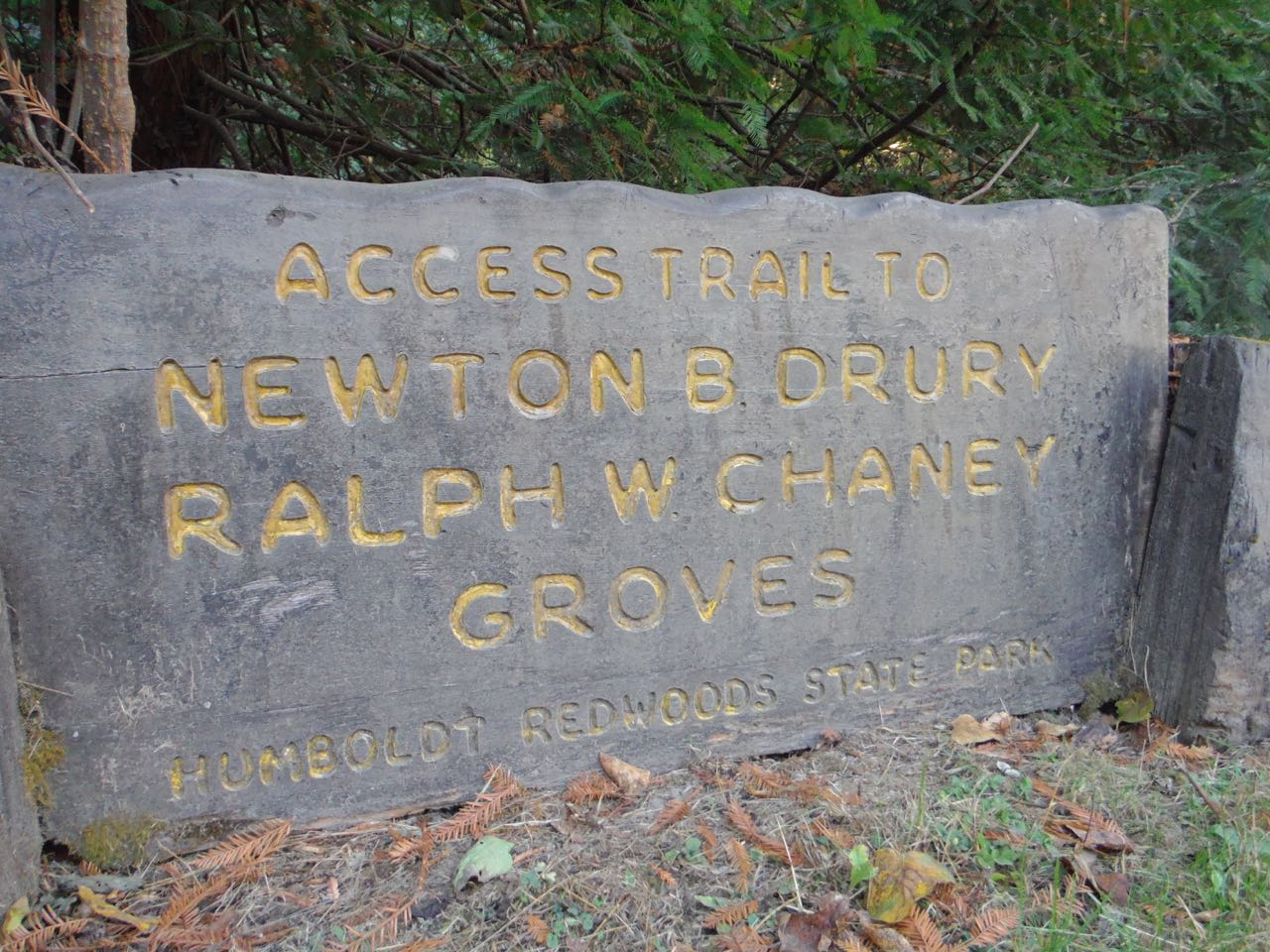 Redwoods 2017 10 08 46 Of 287