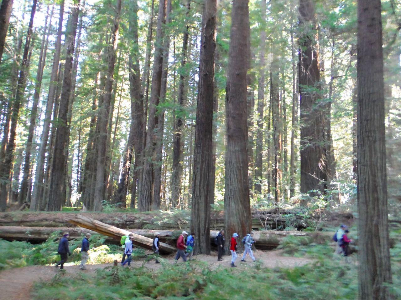 Redwoods 2017 10 08 47 Of 287