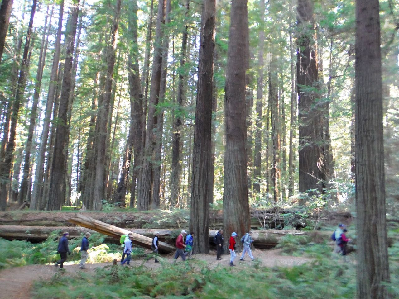 Redwoods 2017 10 08 47 Of 287