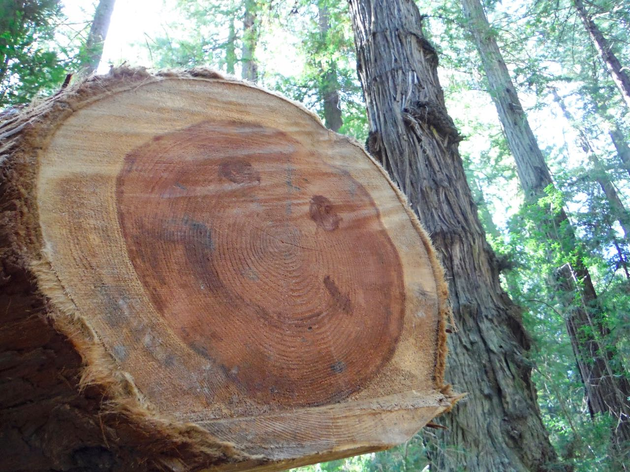 Redwoods 2017 10 08 49 Of 287